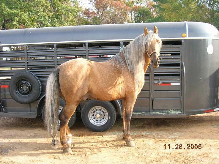 Anyone Show Horses-2006.jpg