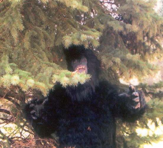 I bought Bigfoot for a nickle-bigfoot_-_500.jpg