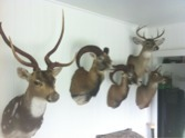 PA Hunters/Fisherman-imageuploadedbyautoguide1336944761.657992.jpg