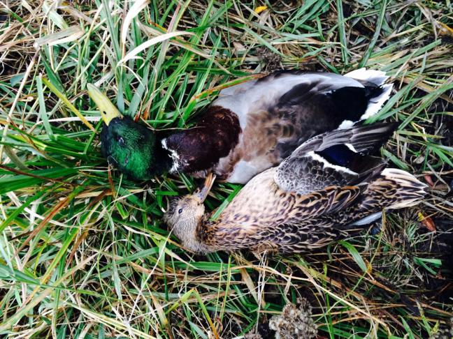 CCR Hunting Pictures!-imageuploadedbyautoguide1414496769.235023.jpg