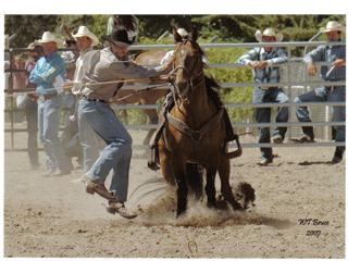 Anyone Rodeo?-state-rodeo-2.jpg