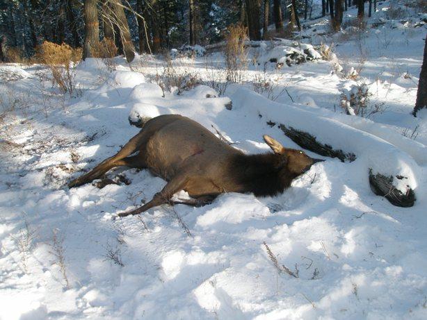 Hunting trip... pics and report!-kill.jpg